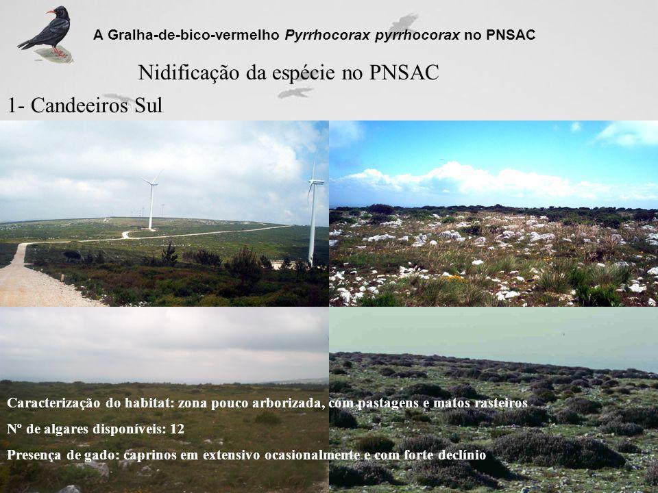 Nidificação da espécie no PNSAC 1- Candeeiros Sul A Gralha-de-bico-vermelho Pyrrhocorax pyrrhocorax no PNSAC Caracterização do habitat: zona pouco arb
