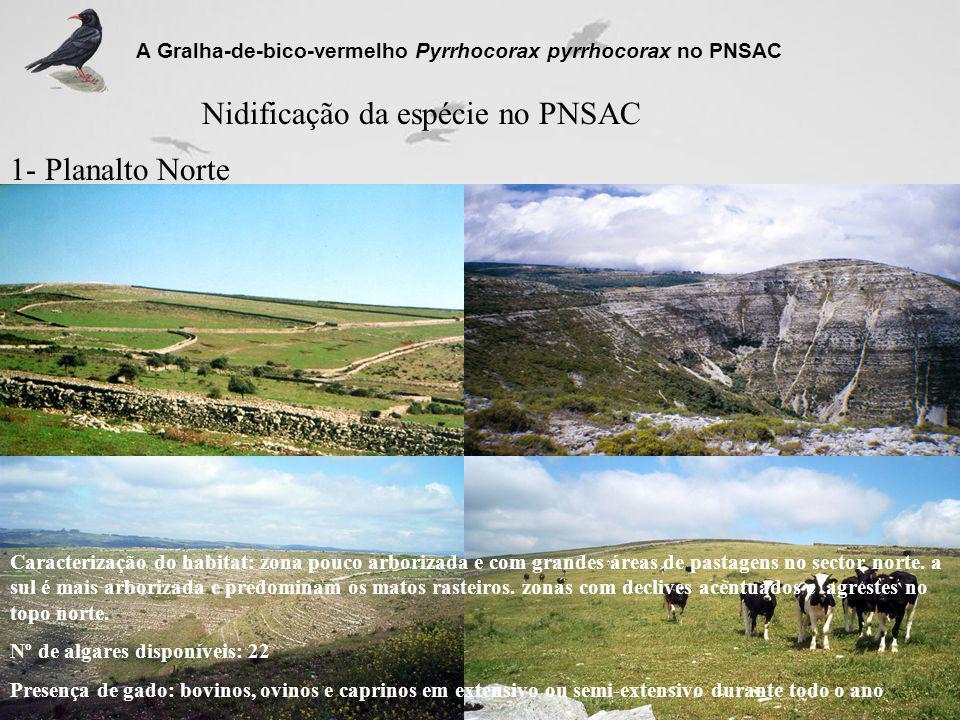 Nidificação da espécie no PNSAC 1- Planalto Norte A Gralha-de-bico-vermelho Pyrrhocorax pyrrhocorax no PNSAC Caracterização do habitat: zona pouco arb