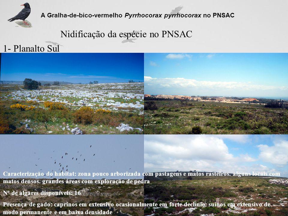 Nidificação da espécie no PNSAC 1- Planalto Sul A Gralha-de-bico-vermelho Pyrrhocorax pyrrhocorax no PNSAC Caracterização do habitat: zona pouco arbor