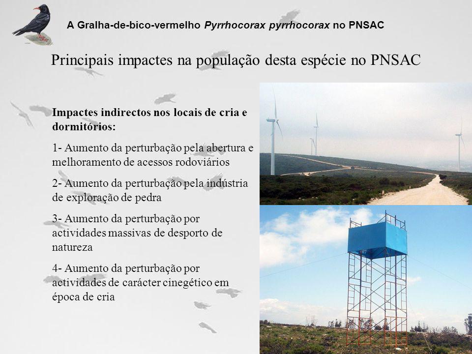 Principais impactes na população desta espécie no PNSAC A Gralha-de-bico-vermelho Pyrrhocorax pyrrhocorax no PNSAC Impactes indirectos nos locais de c
