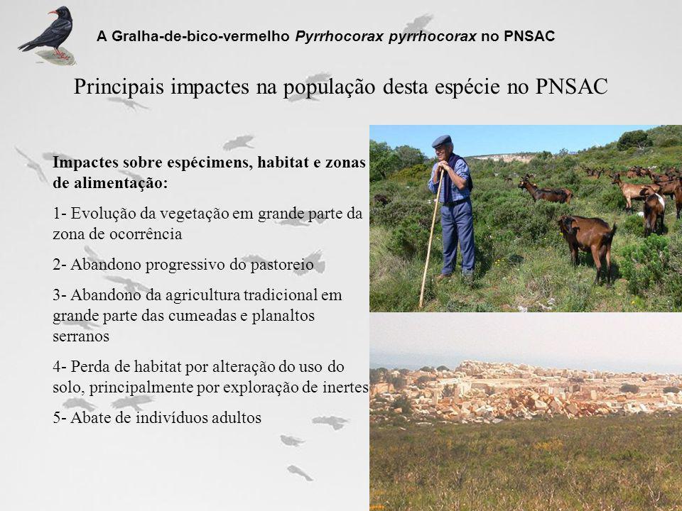 Principais impactes na população desta espécie no PNSAC A Gralha-de-bico-vermelho Pyrrhocorax pyrrhocorax no PNSAC Impactes sobre espécimens, habitat