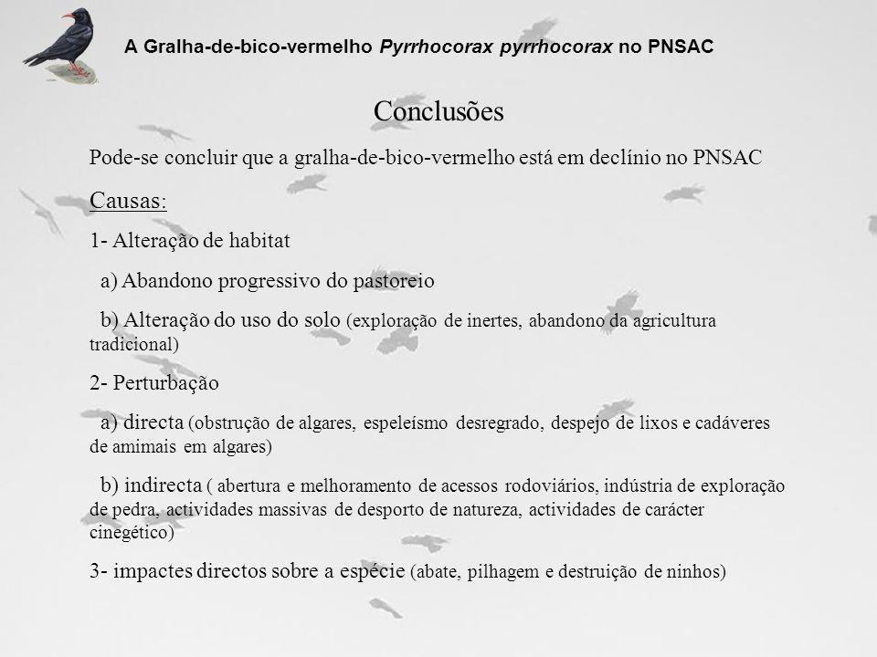 Conclusões A Gralha-de-bico-vermelho Pyrrhocorax pyrrhocorax no PNSAC Pode-se concluir que a gralha-de-bico-vermelho está em declínio no PNSAC Causas