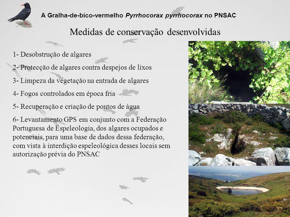 Medidas de conservação desenvolvidas A Gralha-de-bico-vermelho Pyrrhocorax pyrrhocorax no PNSAC 1- Desobstrução de algares 2- Protecção de algares con