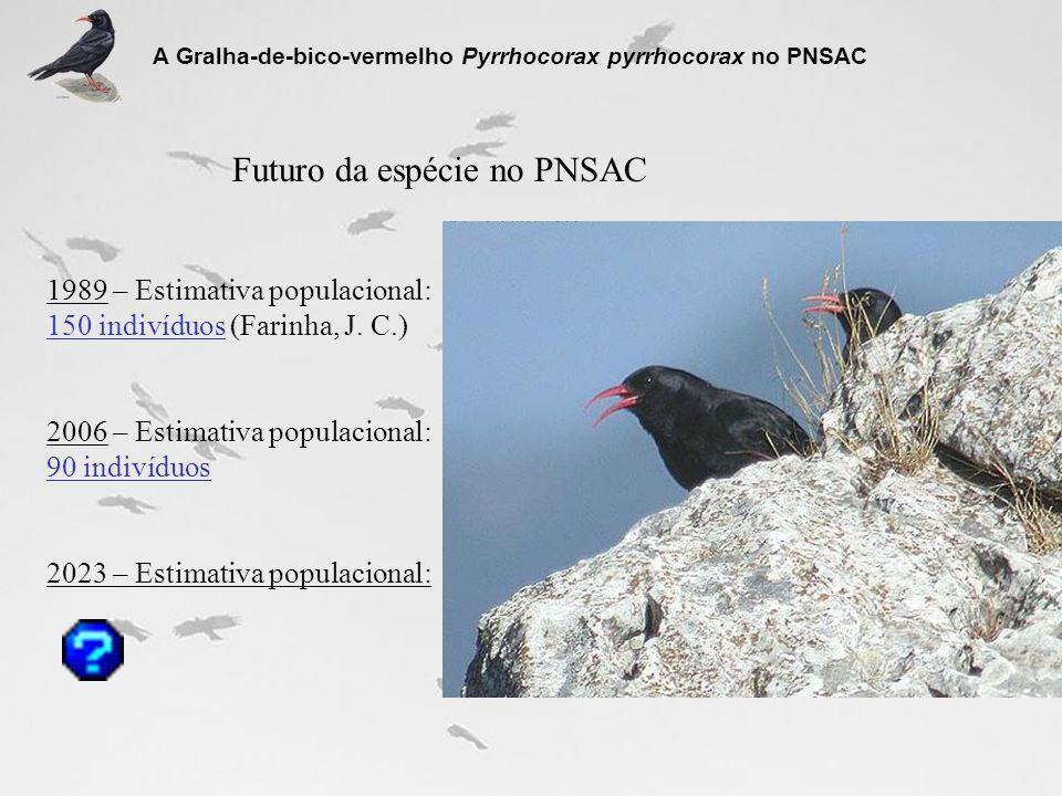 A Gralha-de-bico-vermelho Pyrrhocorax pyrrhocorax no PNSAC Futuro da espécie no PNSAC 1989 – Estimativa populacional: 150 indivíduos (Farinha, J. C.)