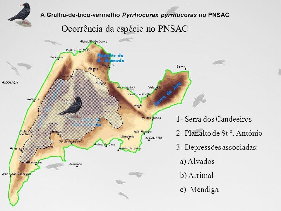 Principais impactes na população desta espécie no PNSAC A Gralha-de-bico-vermelho Pyrrhocorax pyrrhocorax no PNSAC Impactes directos nos locais de cria e dormitórios: 1- Obstrução e/ou entulhamento de algares 2- Pilhagem e destruição de ninhos 3- Actividade espeleísta durante o período de reprodução 4- Despejo de lixo em algares 5- Despejo de cadáveres de animais domésticos em algares 6- Obstrução da entrada de algares pela vegetação natural