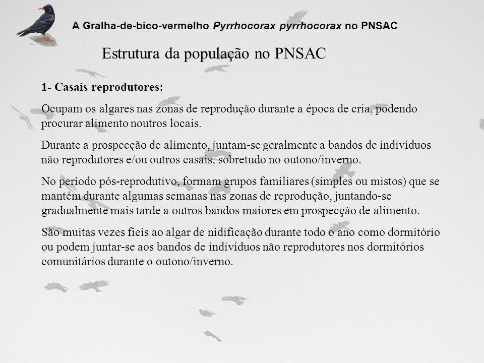 Núcleo de reprodução de Planalto Sul Total de algares frequentados ou com potencial para a nidificação espécie : 16 Variação do nº de algares ocupados entre 1994 e 2006 0 1 2 3 4 5 6 7 8 9 10 11 12 13 14 15 16 19941995199619971998200120022003200420052006 nº de algares ocupados A Gralha-de-bico-vermelho Pyrrhocorax pyrrhocorax no PNSAC