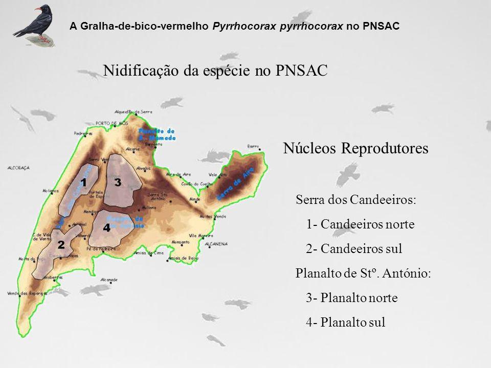 Nidificação da espécie no PNSAC Serra dos Candeeiros: 1- Candeeiros norte 2- Candeeiros sul Planalto de Stº. António: 3- Planalto norte 4- Planalto su