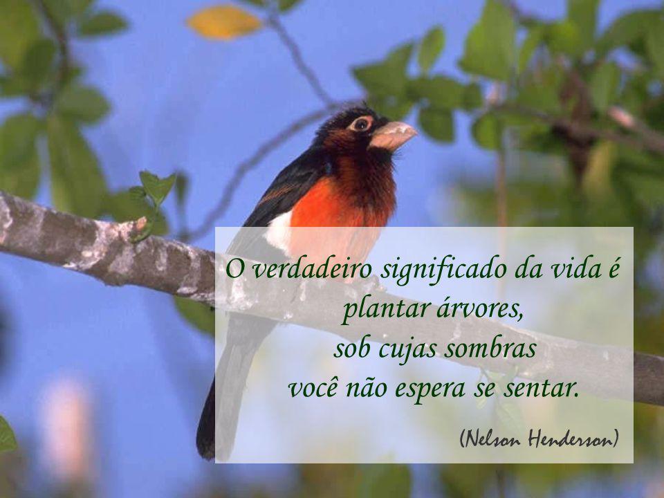 O verdadeiro significado da vida é plantar árvores, sob cujas sombras você não espera se sentar.
