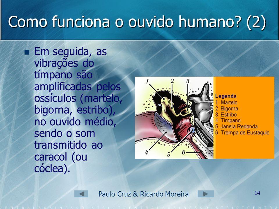 Paulo Cruz & Ricardo Moreira 13 Como funciona o ouvido humano? As ondas sonoras, depois de atingirem o pavilhão auricular (orelha), são conduzidas pel