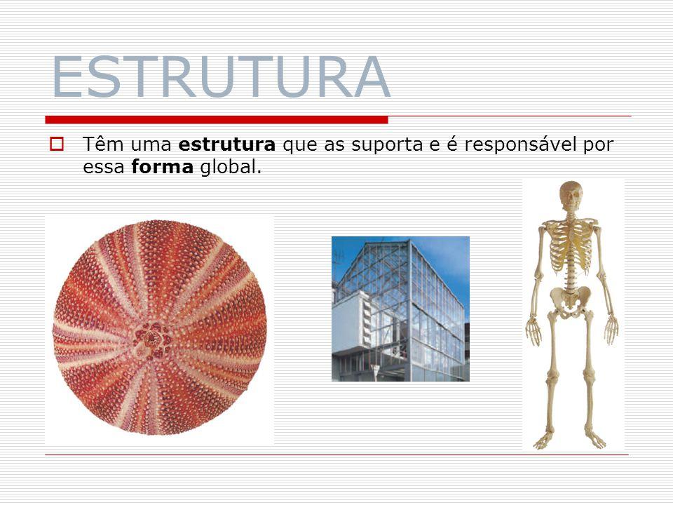 ESTRUTURA Têm uma estrutura que as suporta e é responsável por essa forma global.