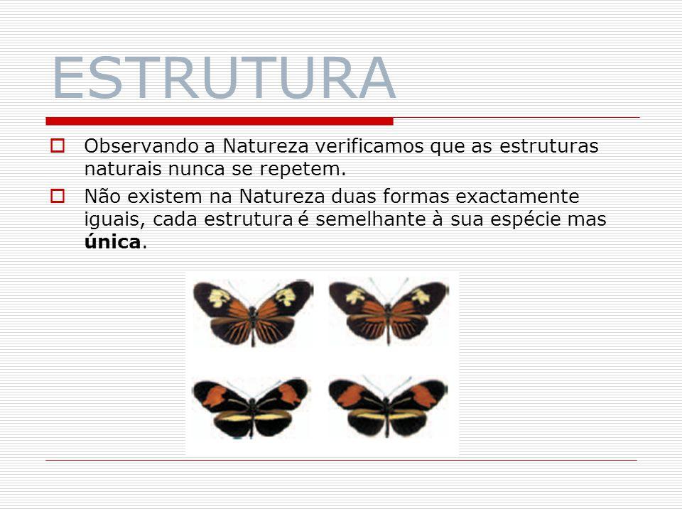 ESTRUTURA As estruturas naturais servem muitas vezes de exemplo ao Homem.
