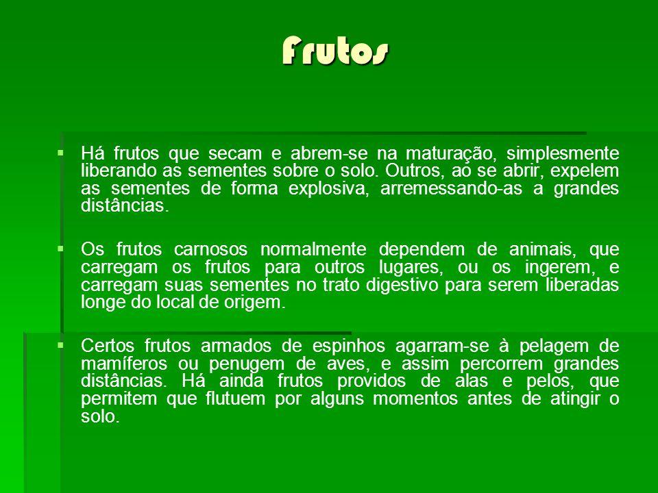 Frutos Há frutos que secam e abrem-se na maturação, simplesmente liberando as sementes sobre o solo. Outros, ao se abrir, expelem as sementes de forma