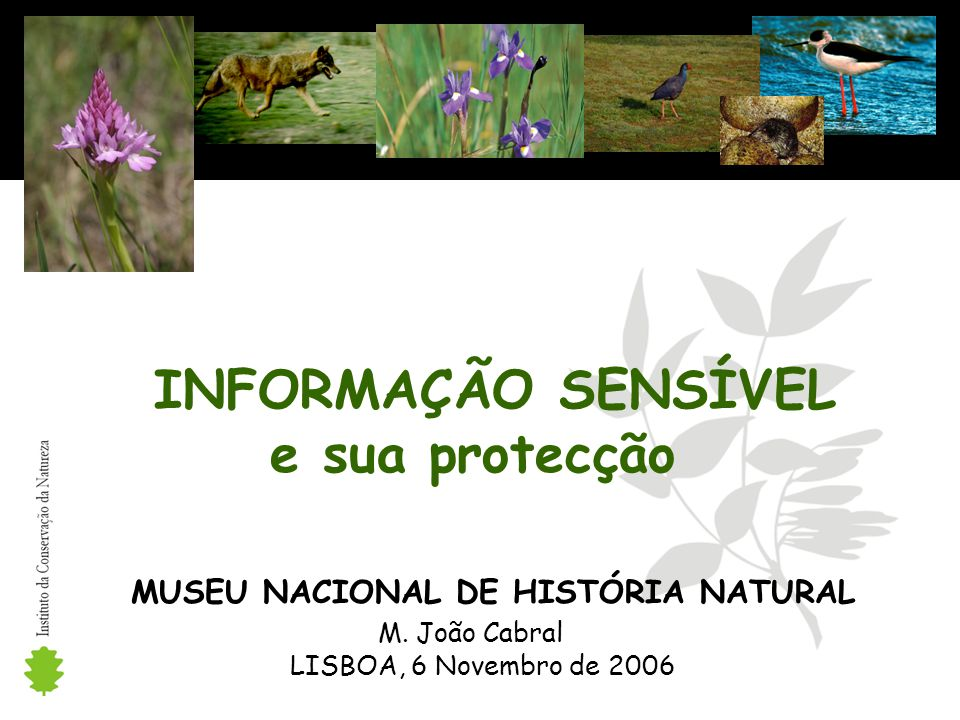INFORMAÇÃO SENSÍVEL e sua protecção MUSEU NACIONAL DE HISTÓRIA NATURAL M.
