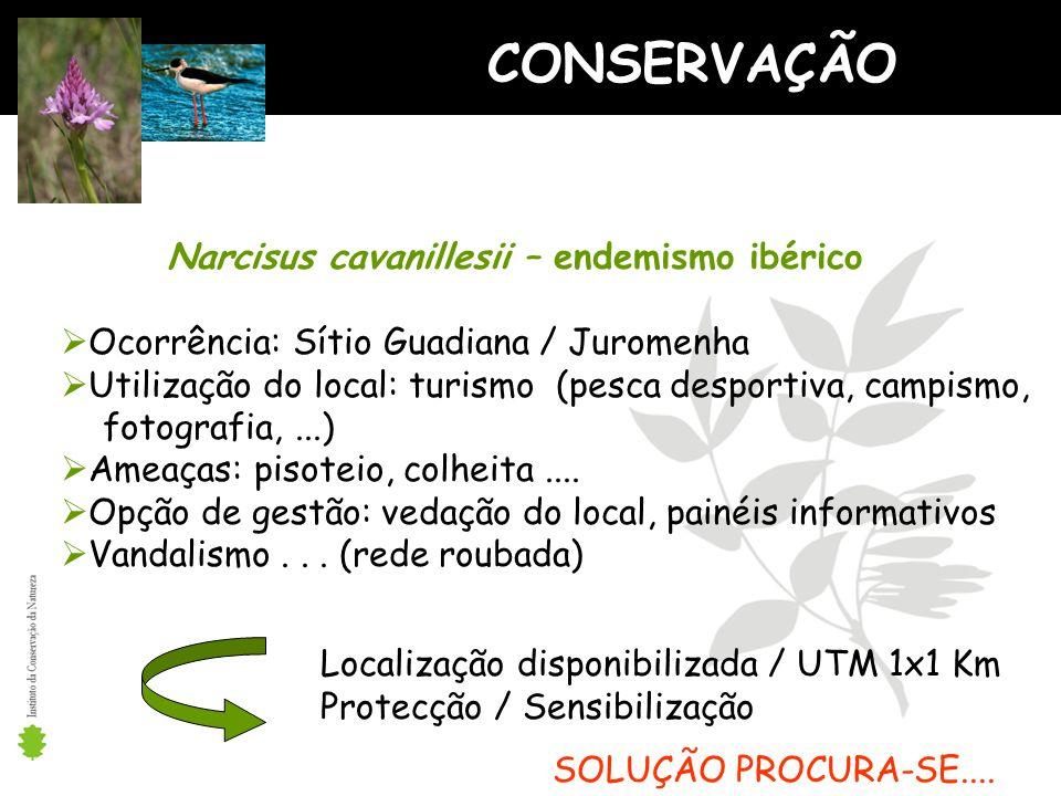 CONSERVAÇÃO Narcisus cavanillesii – endemismo ibérico Ocorrência: Sítio Guadiana / Juromenha Utilização do local: turismo (pesca desportiva, campismo, fotografia,...) Ameaças: pisoteio, colheita....