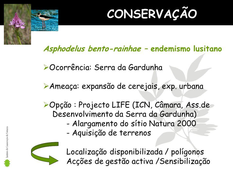 Asphodelus bento-rainhae – endemismo lusitano Ocorrência: Serra da Gardunha Ameaça: expansão de cerejais, exp.