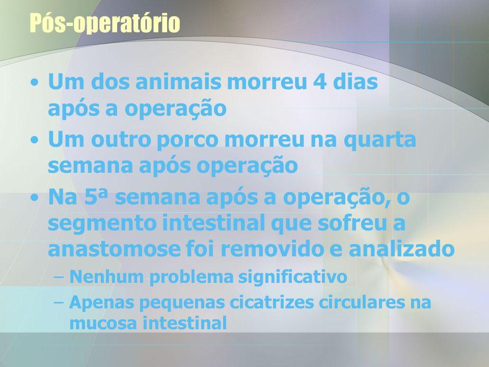Pós-operatório O cólon de um dos animais ficou relativamente isquémico após a anastomose. Efectuou-se uma segunda laparoscopia, dois dias após a prime