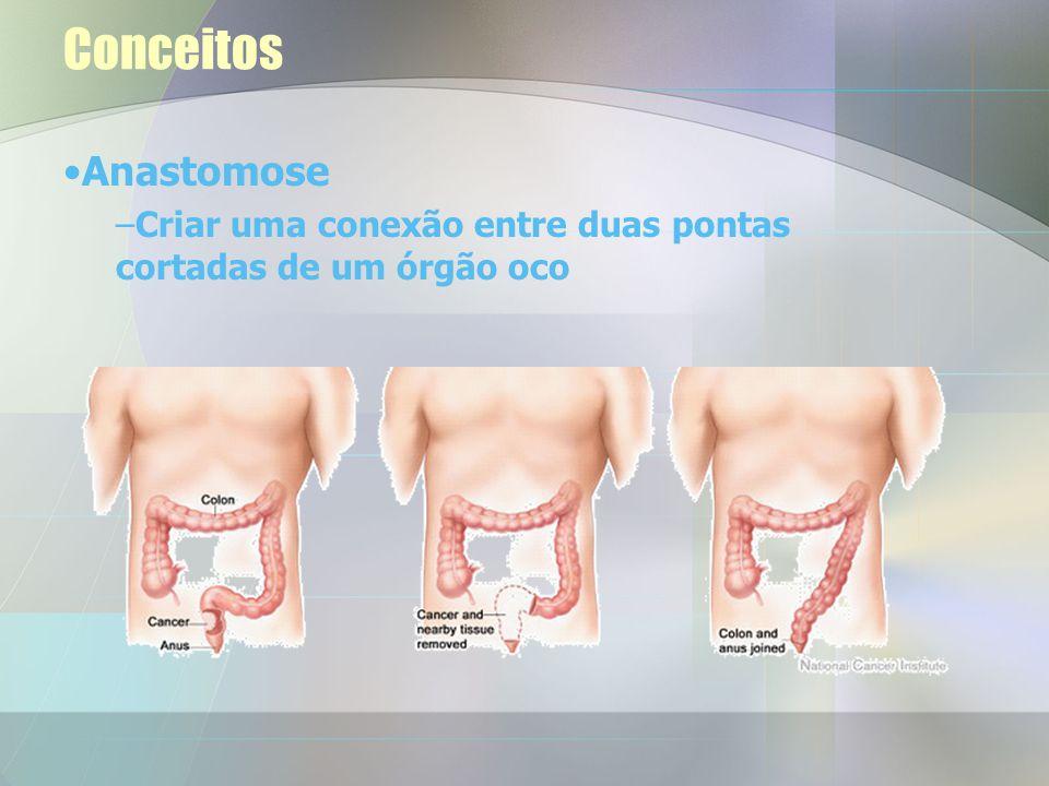 Pós-operatório O cólon de um dos animais ficou relativamente isquémico após a anastomose.