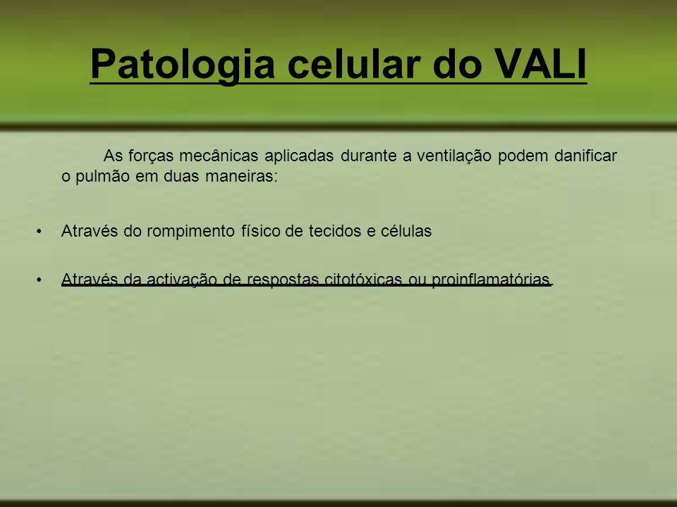 Patologia celular do VALI As forças mecânicas aplicadas durante a ventilação podem danificar o pulmão em duas maneiras: Através do rompimento físico d