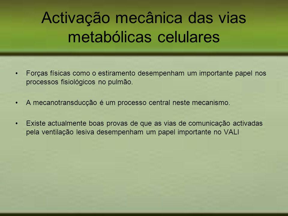 Activação mecânica das vias metabólicas celulares Forças físicas como o estiramento desempenham um importante papel nos processos fisiológicos no pulm