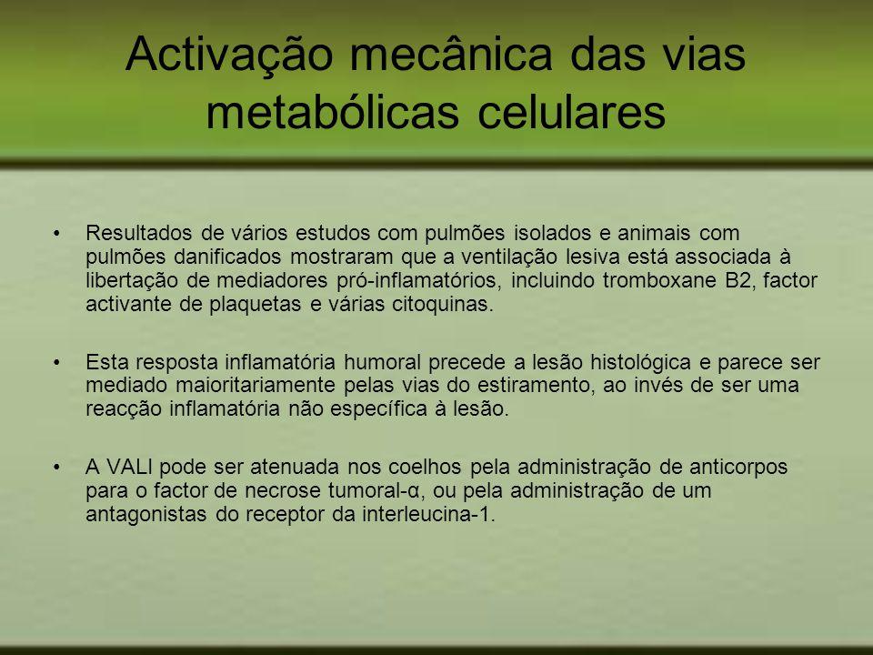 Activação mecânica das vias metabólicas celulares Resultados de vários estudos com pulmões isolados e animais com pulmões danificados mostraram que a
