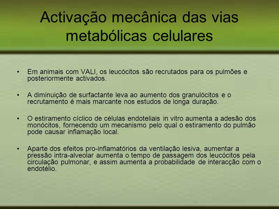 Activação mecânica das vias metabólicas celulares Em animais com VALI, os leucócitos são recrutados para os pulmões e posteriormente activados. A dimi