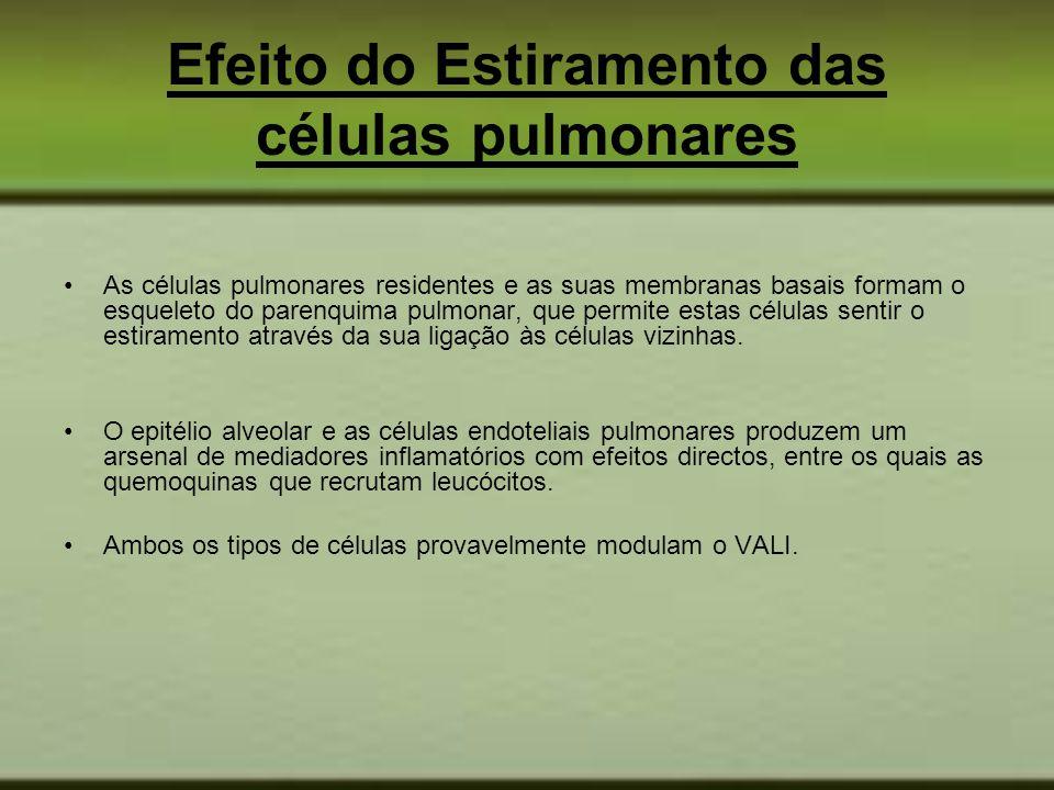 Efeito do Estiramento das células pulmonares As células pulmonares residentes e as suas membranas basais formam o esqueleto do parenquima pulmonar, qu