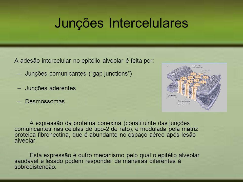 Junções Intercelulares A adesão intercelular no epitélio alveolar é feita por: –Junções comunicantes (gap junctions) –Junções aderentes –Desmossomas A