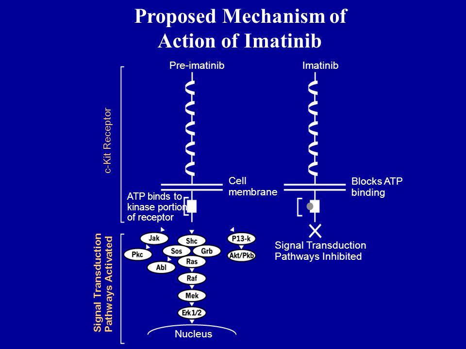 Proposed Mechanism of Action of Imatinib Nucleus Signal Transduction Pathways Activated c-Kit Receptor Pre-imatinibImatinib Blocks ATP binding Signal
