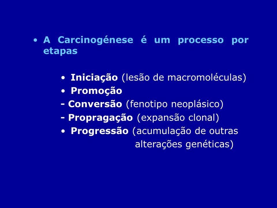 A Carcinogénese é um processo por etapas Iniciação (lesão de macromoléculas) Promoção - Conversão (fenotipo neoplásico) - Propragação (expansão clonal