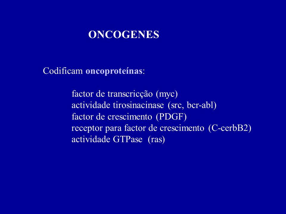 ONCOGENES Codificam oncoproteínas: factor de transcricção (myc) actividade tirosinacinase (src, bcr-abl) factor de crescimento (PDGF) receptor para fa