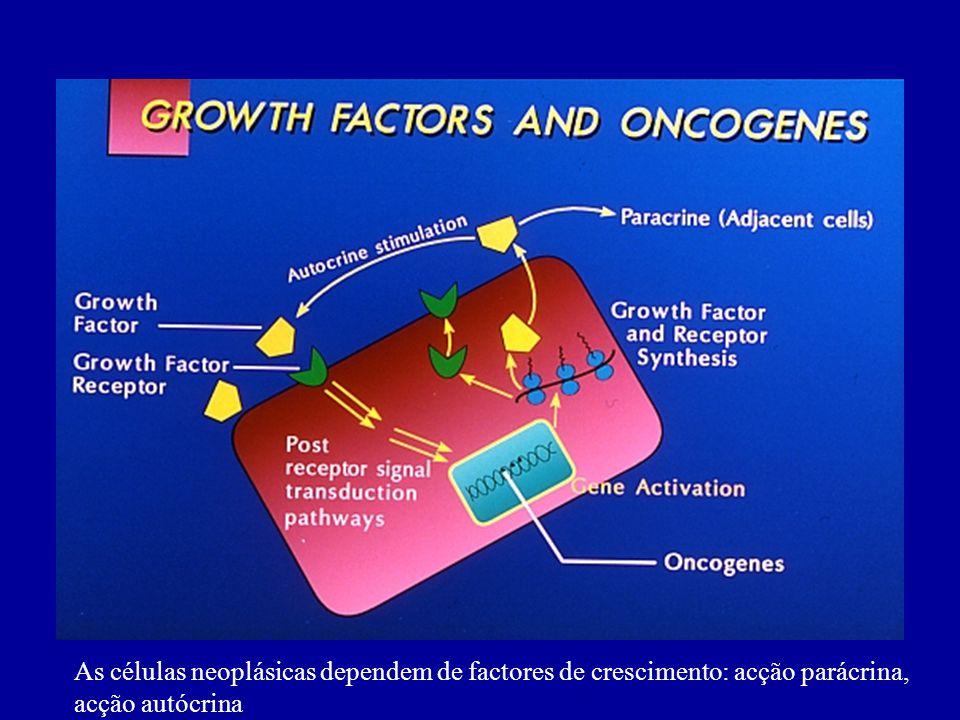 As células neoplásicas dependem de factores de crescimento: acção parácrina, acção autócrina
