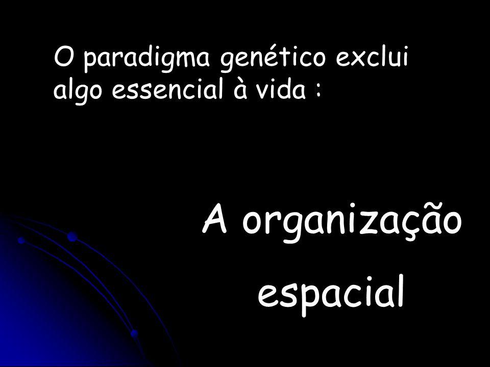 O paradigma genético exclui algo essencial à vida : A organização espacial