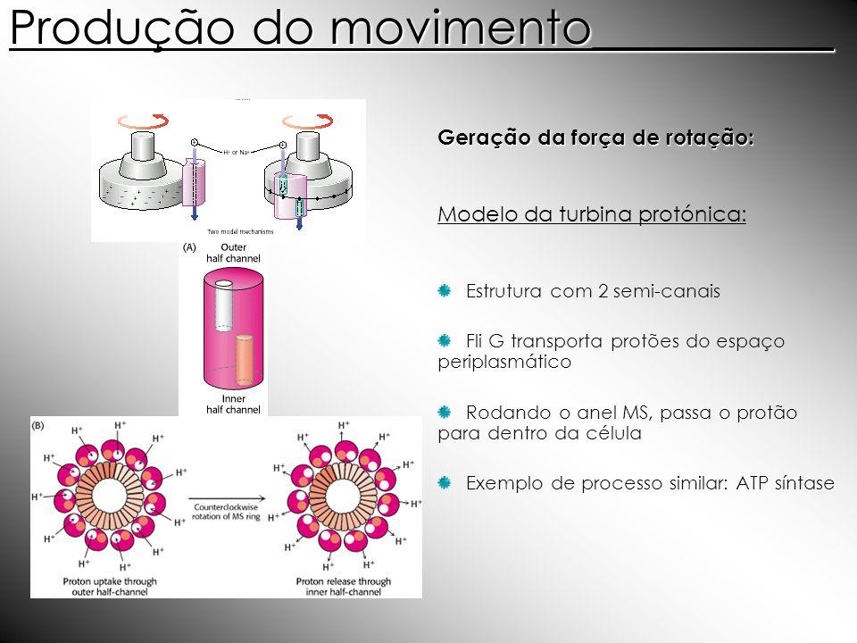 Produção do movimento__________ Geração da força de rotação: Modelo da turbina protónica: Estrutura com 2 semi-canais Fli G transporta protões do espa