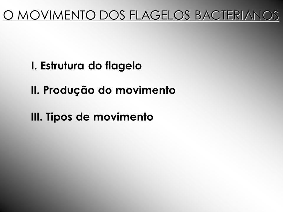 O MOVIMENTO DOS FLAGELOS BACTERIANOS I. do flagelo I. Estrutura do flagelo II. Produção do movimento III. Tipos de movimento