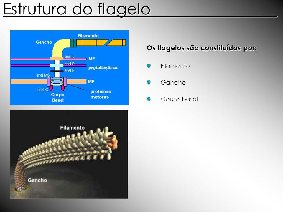Estrutura do flagelo________________ Os flagelos são constituídos por: Filamento Gancho Corpo basal