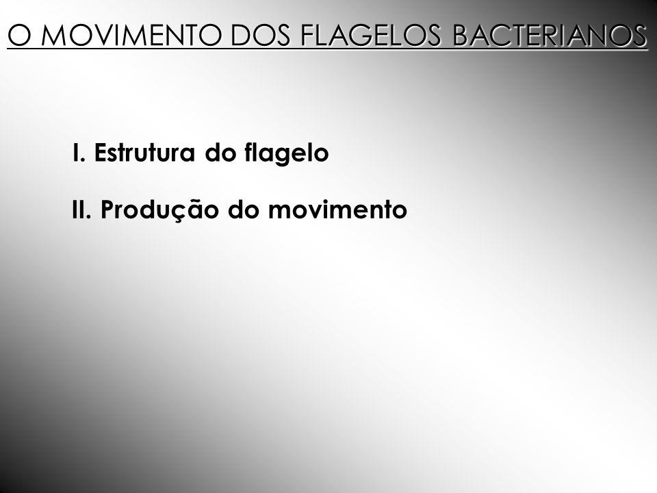 O MOVIMENTO DOS FLAGELOS BACTERIANOS I. do flagelo I. Estrutura do flagelo II. Produção do movimento