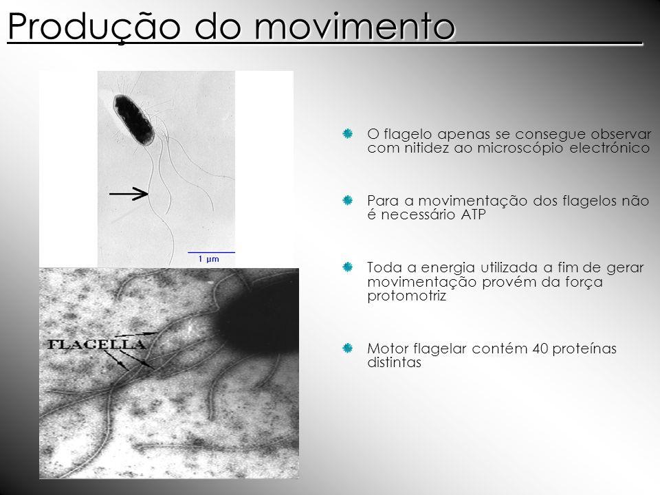 Produção do movimento__________ O flagelo apenas se consegue observar com nitidez ao microscópio electrónico Para a movimentação dos flagelos não é ne