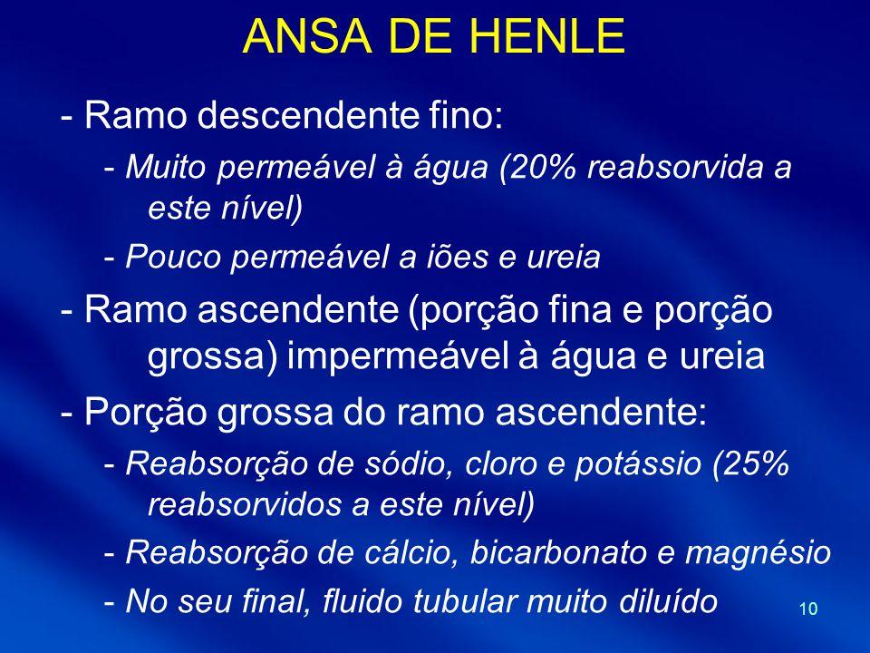 10 ANSA DE HENLE - Ramo descendente fino: - Muito permeável à água (20% reabsorvida a este nível) - Pouco permeável a iões e ureia - Ramo ascendente (