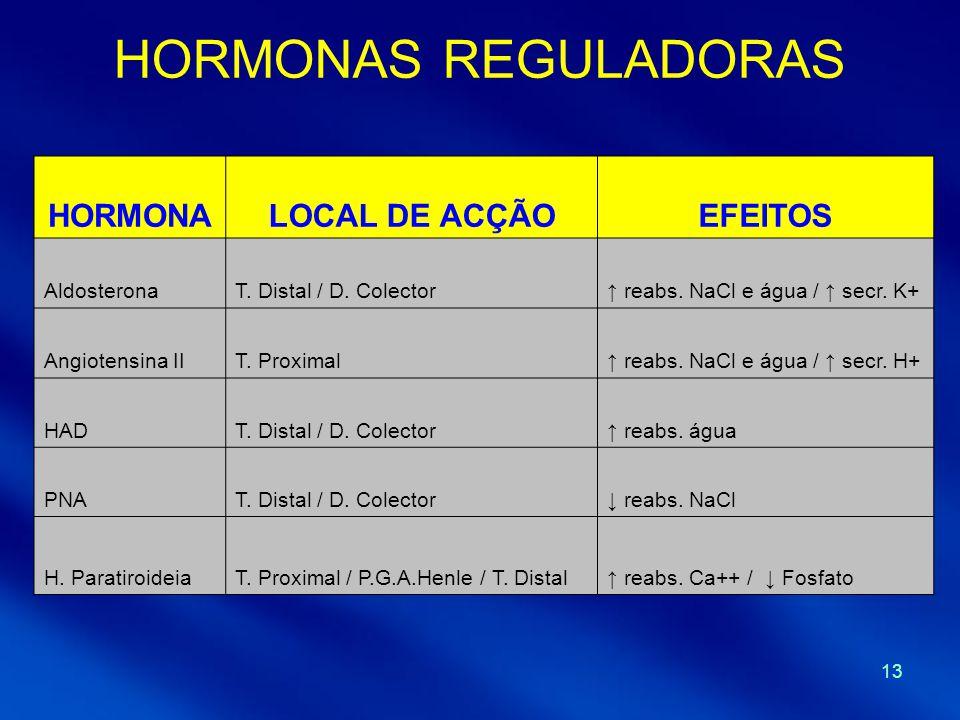 13 HORMONAS REGULADORAS HORMONALOCAL DE ACÇÃOEFEITOS AldosteronaT. Distal / D. Colector reabs. NaCl e água / secr. K+ Angiotensina IIT. Proximal reabs