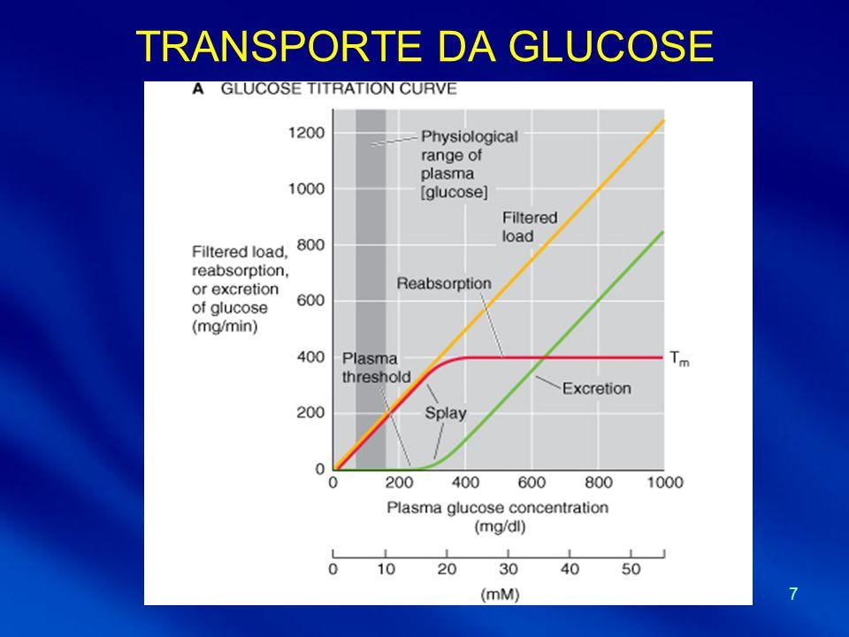 8 TÚBULO PROXIMAL - reabsorção - 65% do Na + e H 2 O e uma % um pouco menor de Cl - são reabsorvidos - Cotransporte de Na + preferencialmente com glucose, bicarbonato e iões orgânicos - Concentrações de glucose, bicarbonato e iões orgânicos diminuiem ao longo do túbulo - Concentrações de creatinina e ureia aumentam ligeiramente ao longo do túbulo - Osmolaridade e concentrações de Na + e Cl - praticamente constantes