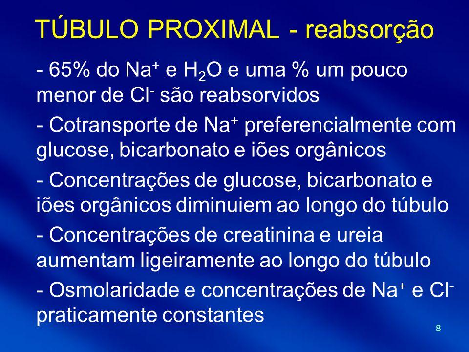 8 TÚBULO PROXIMAL - reabsorção - 65% do Na + e H 2 O e uma % um pouco menor de Cl - são reabsorvidos - Cotransporte de Na + preferencialmente com gluc