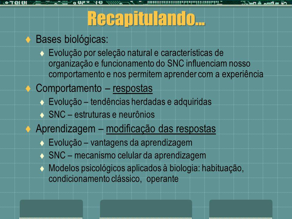Recapitulando... Bases biológicas: Evolução por seleção natural e características de organização e funcionamento do SNC influenciam nosso comportament