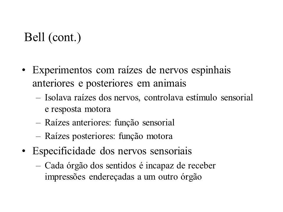 Bell (cont.) Experimentos com raízes de nervos espinhais anteriores e posteriores em animais –Isolava raízes dos nervos, controlava estímulo sensorial