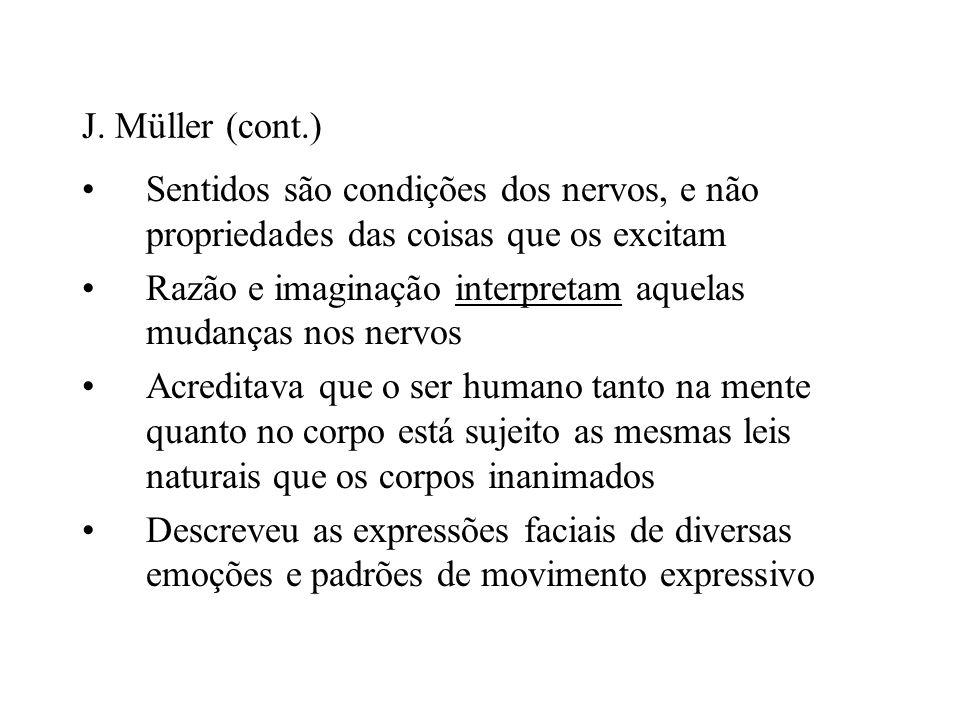 J. Müller (cont.) Sentidos são condições dos nervos, e não propriedades das coisas que os excitam Razão e imaginação interpretam aquelas mudanças nos