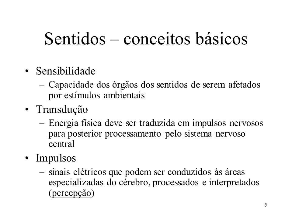 23/08/2005PPB 1 - Aula 046 Sentidos e áreas corticais