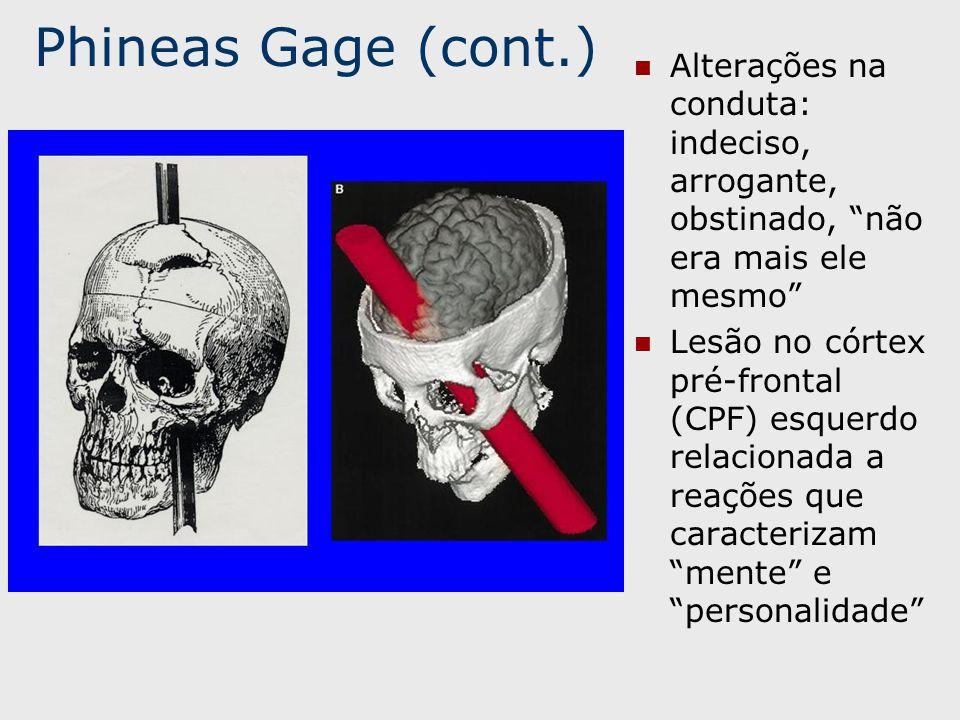 Phineas Gage (cont.) Alterações na conduta: indeciso, arrogante, obstinado, não era mais ele mesmo Lesão no córtex pré-frontal (CPF) esquerdo relacionada a reações que caracterizam mente e personalidade