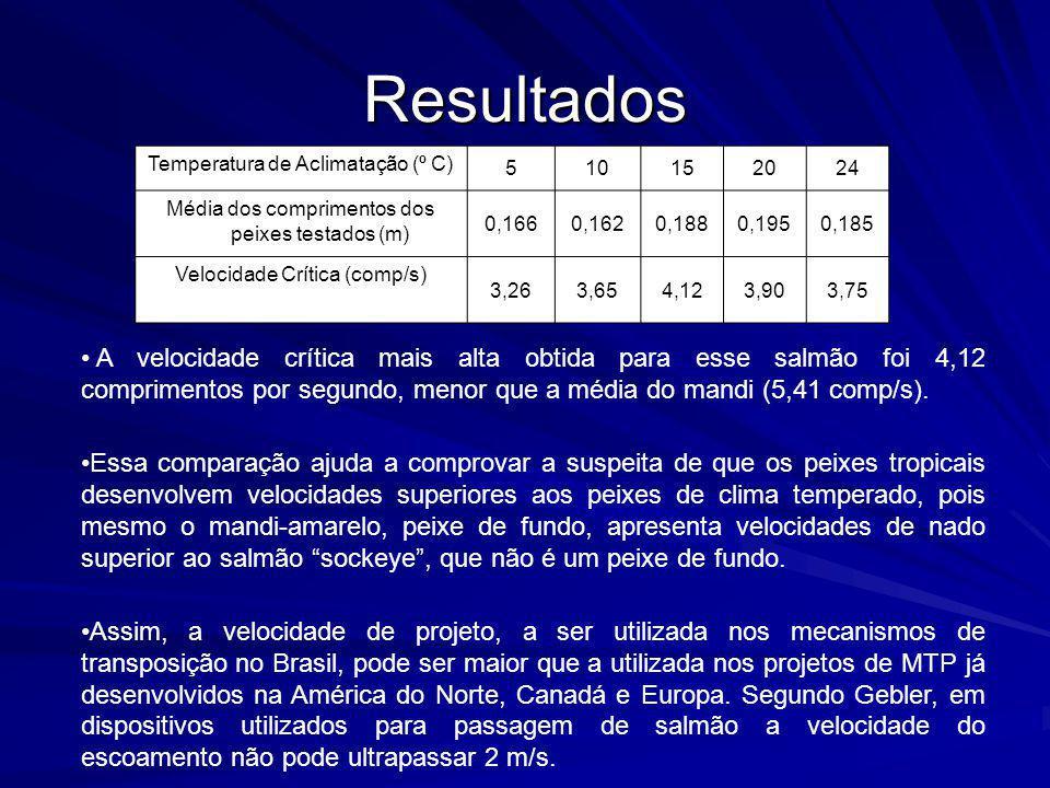Resultados Temperatura de Aclimatação (º C) 510152024 Média dos comprimentos dos peixes testados (m) 0,1660,1620,1880,1950,185 Velocidade Crítica (com