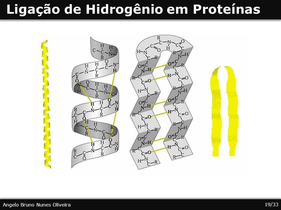 19/33 Angelo Bruno Nunes Oliveira Ligação de Hidrogênio em Proteínas