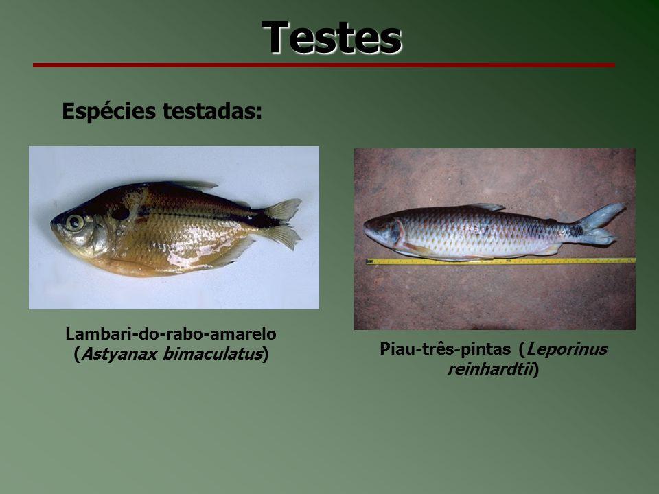 Testes Espécies testadas: Lambari-do-rabo-amarelo (Astyanax bimaculatus) Piau-três-pintas (Leporinus reinhardtii)