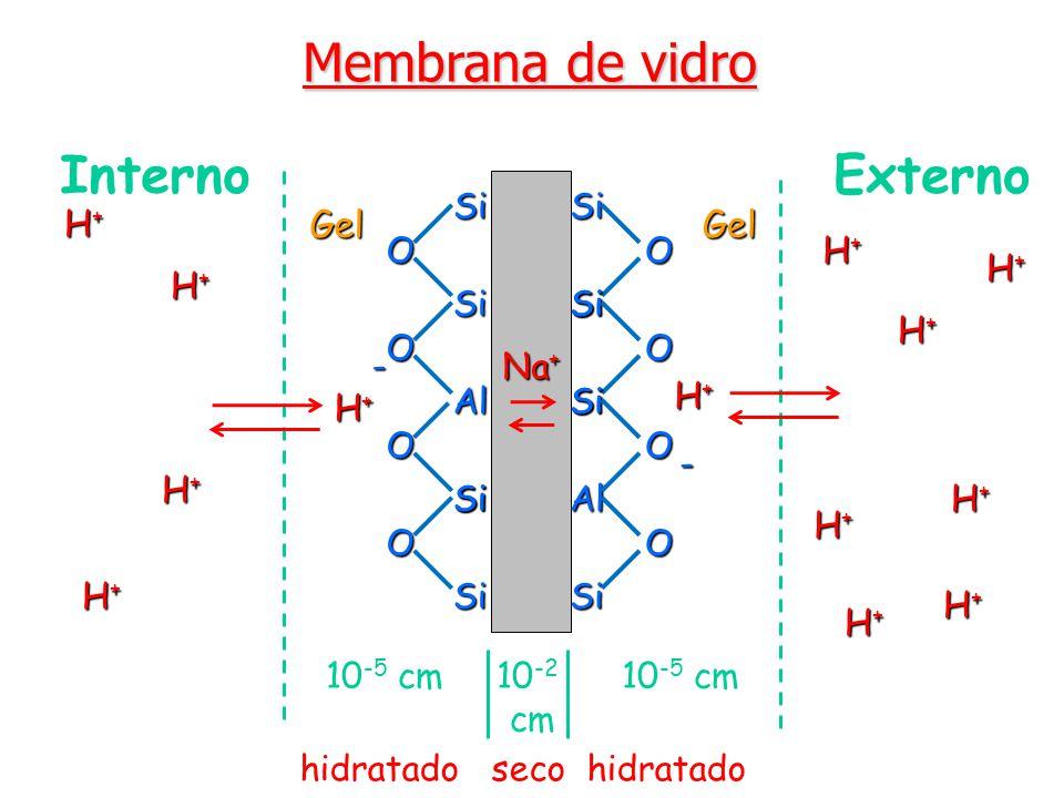 Membrana de vidro 10 -5 cm 10 -2 10 -5 cm cmSiSi O Al O Si O Si Si OSiSi O Si Si O Si Al O Si O H+H+H+H+ H+H+H+H+ H+H+H+H+ H+H+H+H+ H+H+H+H+ Interno Externo GelGel H+H+H+H+ H+H+H+H+ H+H+H+H+ H+H+H+H+ H+H+H+H+ H+H+H+H+ - - hidratado seco hidratado H+H+H+H+ H+H+H+H+ Na +